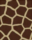 Os grandes pontos do Giraffe short a pele Fotos de Stock