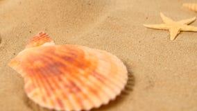 Os grandes shell bonitos encontram-se na areia, estrelas de mar, rotação, close up vídeos de arquivo