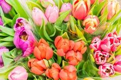 Os grupos da mola colorido das tulipas florescem, vista superior imagens de stock royalty free