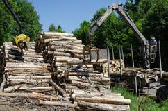 Os guindastes agarram a pilha de logs da madeira no moinho da madeira serrada Fotos de Stock Royalty Free