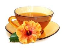 Os hibiscus alaranjados florescem e chá no copo de chá ambarino atransparent Fotografia de Stock