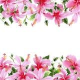 Os hibiscus do Wildflower picam o quadro da flor em um estilo da aquarela ilustração royalty free