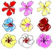 Os hibiscus Vector o grupo Imagens de Stock