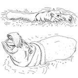Os hipopótamos na água isolaram o contorno preto no fundo branco Sket ilustração do vetor