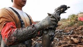 Os homens chineses escavam para fora raizes de uns lótus é um vegetal alto do rendimento que cresça profundamente nos sedimentos  fotos de stock