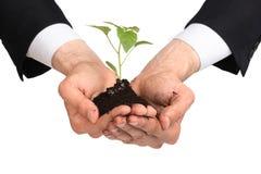Os homens de negócio entregam uma planta Imagens de Stock