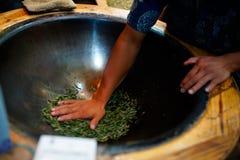 Os homens estão fixando as folhas de chá imagem de stock