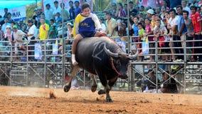 Os homens não identificados controlam seu búfalo para correr em um esporte de competência Foto de Stock