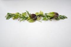 Os ingredientes frondosos da salada verde arranjaram em uma linha reta Foto de Stock Royalty Free