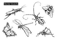 Os insetos esboçam os ícones decorativos ajustados com libélula, mosca, butterf Imagens de Stock