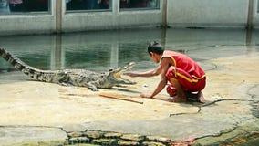 Os instrutores de Rofessional executam a mostra arriscada do conluio com o crocodilo grande da água fresca e obtiveram quase sua  vídeos de arquivo