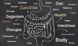 Os intestinos esboçam com palavras ilustração stock