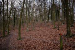 Os invernos andam no parque do país da rainha Elizabeth's imagem de stock royalty free