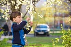 Os irmãos mais novo felizes caçoam no jardim da mola com árvores de florescência, Fotos de Stock Royalty Free