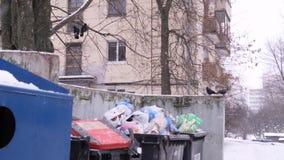 Os Jackdaws e os corvos sentam-se em latas de lixo nevar Polui??o ambiental Desperdice a classificação, proteção ambiental vídeos de arquivo