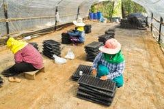 Os jardineiro são sementes selecionadas Foto de Stock
