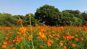 Os jardins de Hamarikyu são um grande e jardim atrativo da paisagem no Tóquio, distrito de Chuo, rio de Sumida, Japão filme