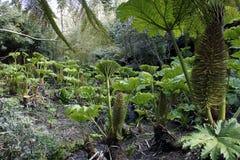 Os jardins perdidos de Heligan em Cornualha, Inglaterra Foto tomada sobre: 9 de junho de 2009 Foto de Stock Royalty Free