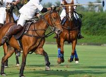 Os jogadores do polo do cavalo estão competindo fotos de stock royalty free