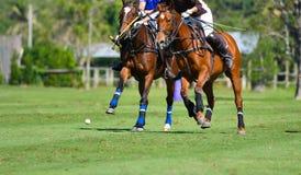 Os jogadores do polo protegem uma bola de polo Imagens de Stock Royalty Free