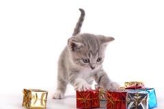 Os jogos do gatinho com presentes Fotografia de Stock
