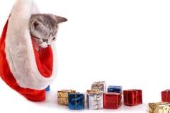 Os jogos do gatinho no fundo branco Imagem de Stock