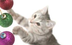 Os jogos do gato do cinza Fotos de Stock Royalty Free