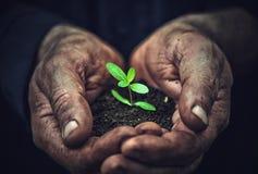Os jovens brotam plantas nas mãos sujas velhas, conceito Fotos de Stock