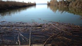 Os juncos secos flutuam na água perto da costa no lago vídeos de arquivo