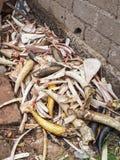 Os, klaxons jetés et andouillers empilés dans le coin d'un marché local au Cameroun, Afrique images stock