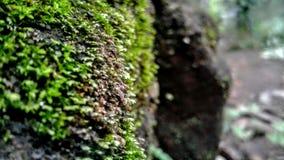 Os líquenes verdes da rocha imagens de stock