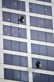 Os líquidos de limpeza de janela trabalham na construção alta da elevação Imagens de Stock Royalty Free
