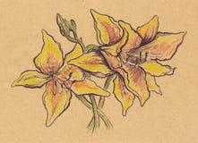 Os lírios do amarelo do sepia do vintage esboçam o papel do ofício isolado Imagem de Stock