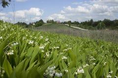 Os lírios do vale florescem perto da vila Imagem de Stock Royalty Free