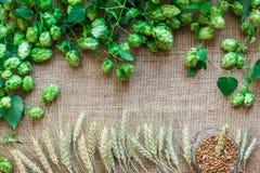 Os lúpulos frescos verdes com trigo como o espaço da cópia moldam a área de texto no fundo do pano de saco Fotografia de Stock Royalty Free