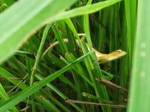 Os lagartos imagem de stock royalty free