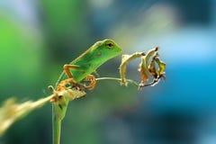 Os lagartos imagens de stock royalty free