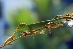 Os lagartos imagem de stock