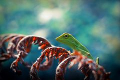 Os lagartos Hang Out fotos de stock royalty free