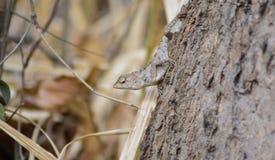 Os lagartos pequenos podem ser encontrados em Tail?ndia r imagens de stock royalty free