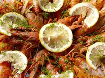 Os lagostins Foto de Stock