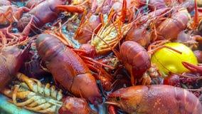 Os lagostins de Louisiana fervem pr?ximo acima imagem de stock