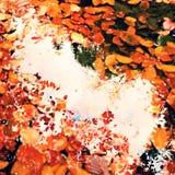 Os leves e as pedras caídos da faia na água do rio da montanha, as primeiras folhas coloridas gritam o nível de água do espelho Foto de Stock Royalty Free