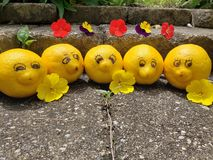 Os limões felizes sorrirem para a câmera quando em umas férias ensolaradas fotos de stock