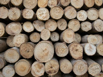 Os logs Imagem de Stock
