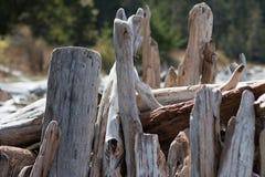 Os logs e as partes cinzentos, marrons e descorados da madeira lançada à costa empilharam acima e empilhado para formar uma escul Imagens de Stock
