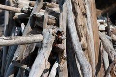 Os logs e as partes cinzentos, marrons e descorados da madeira lançada à costa empilharam acima e empilhado para formar uma escul Foto de Stock