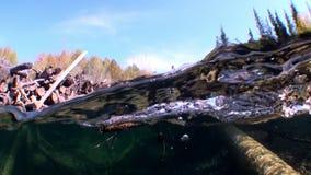 Os logs submergem na luz solar na água de Lena River em Sibéria de Rússia video estoque