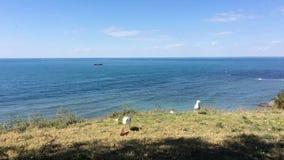 Os lotes das gaivota de mar brancas, cinzentas voaram a alimentação vídeos de arquivo