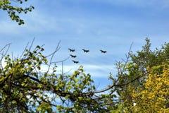 Os lutadores dos aviões de combate voam contra o céu azul Esquadrão do jato fotografia de stock royalty free